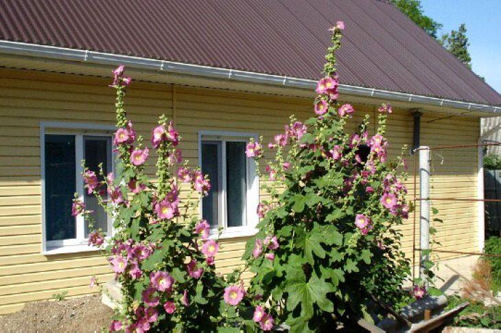 Гостевой дом №17